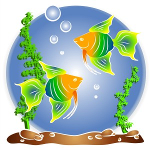 Fishbowl_2776088