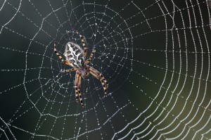 Spider_6572596