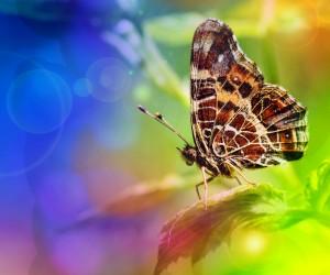 http://www.dreamstime.com/-image20500403