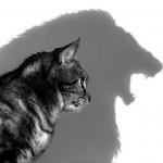 Cat Medicine_6505099